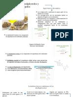 metabol. agliceroles y esfingolipidos.pptx