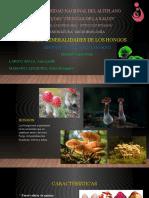 MICROBIOLOGIA HONGOS - exposicion.pptx
