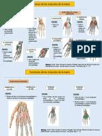 funciones de los musc. de la mano