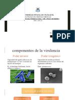 INFECCIONES ASINTOMÁTICAS Y MODALIDADES DE ACCIÓN PATÓGENA.pptx