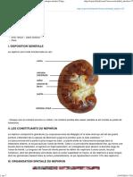 _publication_du_cuen_physiologie_et_physiopathologie_renales_chapitre_entier