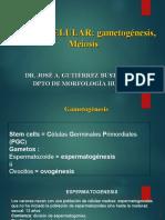 CICLO CELULAR meiosis.ppt