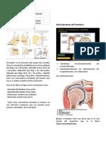 03 REUMATOLOGÍA -Hombro-doloroso (corregido).docx