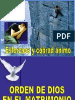 Cobra Animo