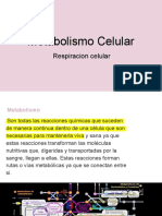 Metabolismo 2