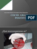 COCOS   GRAM    POSITIVOS.pptx