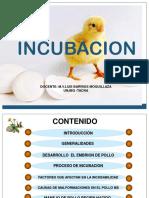 6. INCUBACION 2011