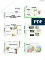 sistema-articular