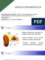 BIOQUÍMICA II hormonas