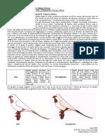 Diamante_Codalunga_allegato_1_Ino.pdf