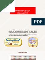 transcripcion