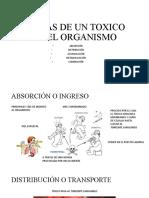ETAPAS DE UN TOXICO EN EL ORGANISMO.pptx