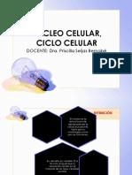 nucleo ciclo celular.pdf