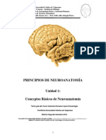 Conceptos básicos de neuroanatomía