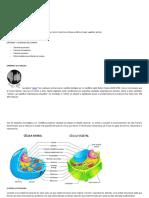 1 UNIDAD La nutricion y la celula grado 4 (