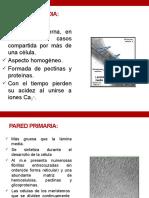 CLASE 3 BIOL ESMVZ 2.pptx parte 2.pptx