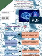 NEUROPLASTICIDAD PPT - PDF