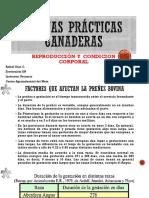 6. BPG REPRODUCCION Y CONDICION CORPORAL