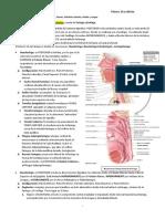 Faringe, Esofago y Estómago EDP.docx