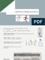 Sistema músculoesquelético expo.pptx