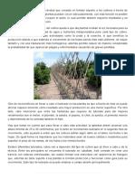 TUTORADO, TIPOS Y BENEFICIOS.pdf