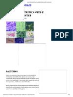Bactérias Nitrificantes e Desnitrificantes