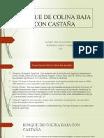 BOSQUE DE COLINA BAJA CON CASTAÑA PPT.pptx
