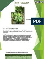Calendario Y fenologia forestal