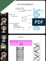 ANALISIS DNA FINGER PRINTING