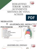 (24) MEDIASTINO POSTERIOR - AORTA DESCENDENTE - VENAS ACIGOS