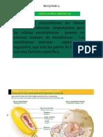 Diferencia entre Célula Eucariótica y Procariótica Archivo.pdf
