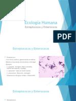 3.Estreptococos