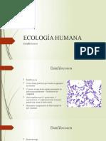 4.Estafilococos