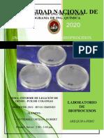Lab- PCR.docx