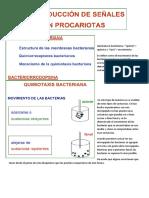 Transduccion de señales en procariotas-3