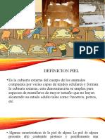 CONSERVACION DE PIELES
