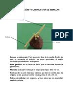 IDENTIFICACIÓN Y CLASIFICACIÓN DE SEMILLA1