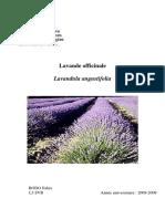 lavande_officinale