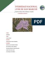 Informe Cuenca.docx