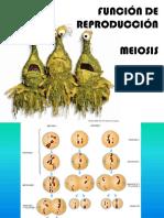 p14_meiosis.pdf