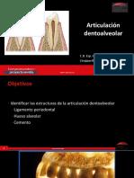 articulacion dentoalveolar