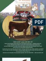 MCS Cattle Company Brochure 2011-01