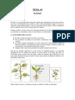 EL TALLO.pdf