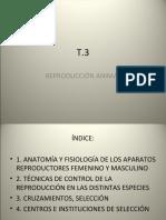 UT3_reproduccion animal (3).ppt