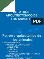 SESION 2.  EL PATRÓN ARQUITECTÓNICO DE LOS ANIMALES.pptx