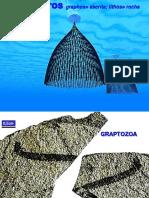 Graptozoa 2014