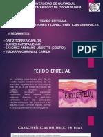 GRUPO-2. TEJIDO EPITELIAL