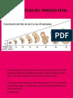 CARACTERÍSTICAS DEL PERIODO FETAL (9° a  40° semana)