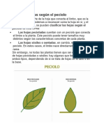Tipos de hojas según el pecíolo.docx