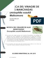 21-07-2020 Presentación de la moscas de la fruta - Drosophila suzukii